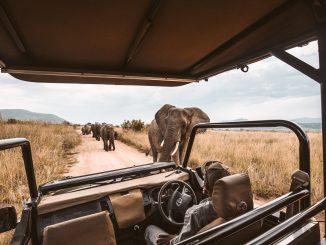 Quels sont les meilleurs sites à visiter pour un safari en Tanzanie ?