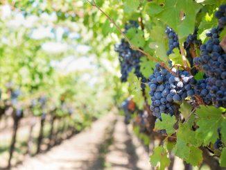 Combien cela peut rapporter d'investir dans le vin ?