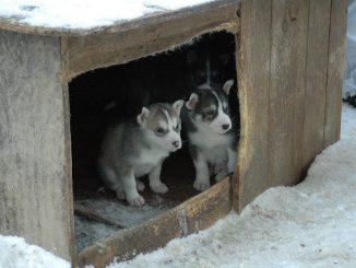 Comment construire une niche pour votre chien par vous-même ?